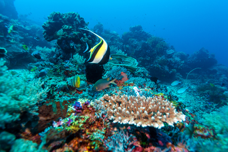Fishes and Sea Bottom of Ecosystem of Tropical Coral Reef, Balinese diving, Indonesia