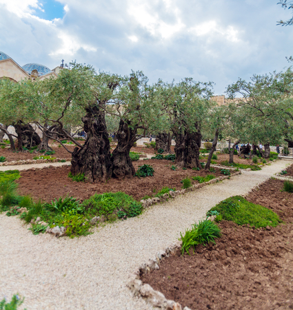 Gethsemane Garden at Mount of Olives, Jerusalem