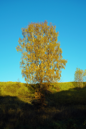 Beautiful landscape with a lonely birch with yellow autumn foliage on a hillock Stock Photo