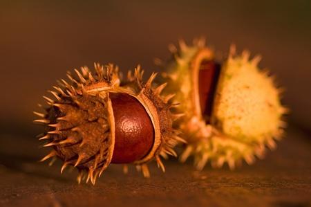 castaÑas: Detalle de dos castañas grandes y maduros