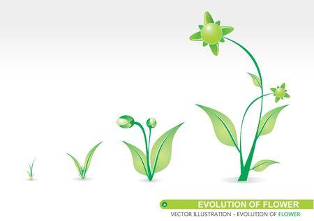 period: Four period of Flower Evolution