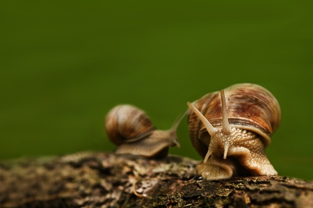 Green background with two snails on wood photo