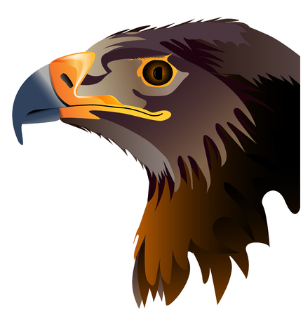 buzzard: Vector abstract illustration of eagle head isolated on white background
