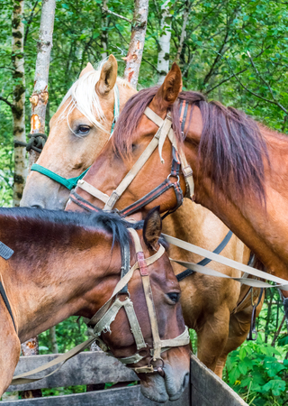 Three horses standing side by side at the trough heads close to each other