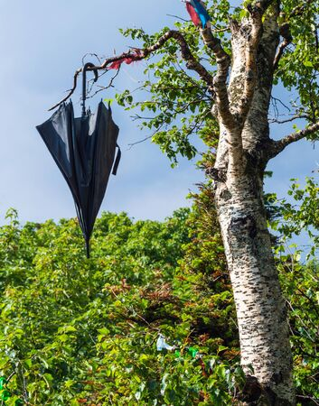 Black umbrella hanging on the birch tree on blue sky background Stock Photo