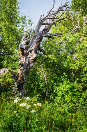 Wonderfull dead tree in the green forest