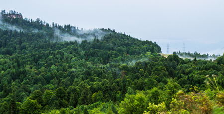 bohemia: Forested mountain slope in low lying cloud with the evergreen conifers shrouded in mist in a scenic landscape view