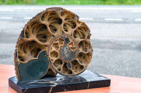 elaborate: Ancient ammonite in a cut on a wooden surface