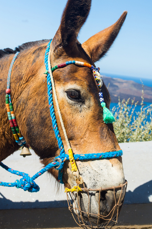 Portrait of a young cute donkey with colorful decorations on the harness