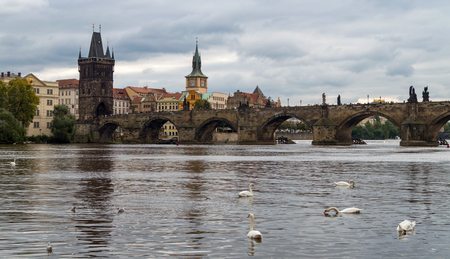 Prague. Image of Charles Bridge in Prague with swans in the foreground in nasty weather day with clouds on sky.