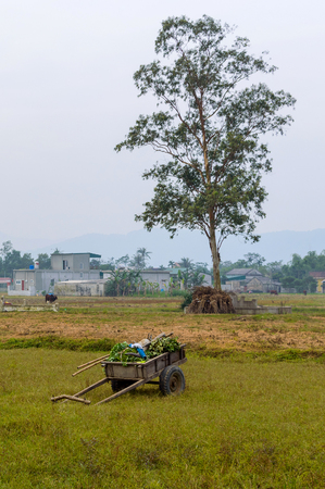 bullock: A farmers cart next to a tree in a rice field in North Vietnam