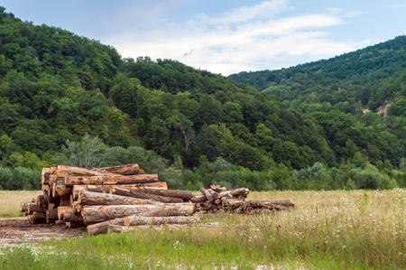 Logs timber in a clearing in the mountains