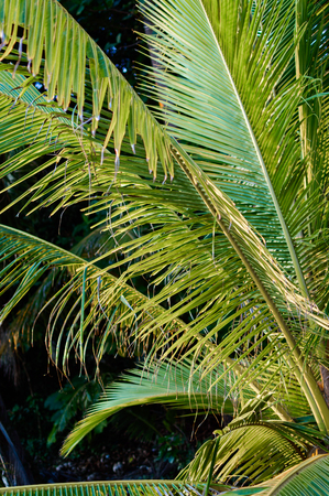 palm leafs on dark background jungle theme stock photo picture and