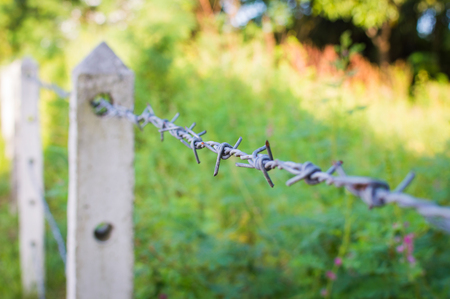 Barbed wire fence in overgrown plant or garden Stock Photo