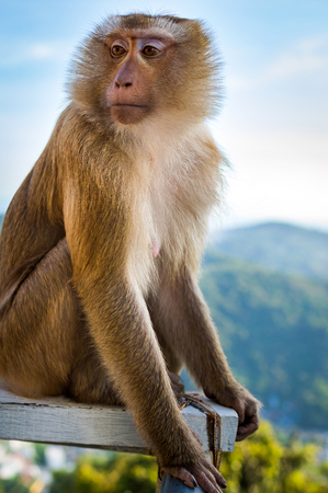 Portrait of Expressive monkey face by the the blue sky and mountains background