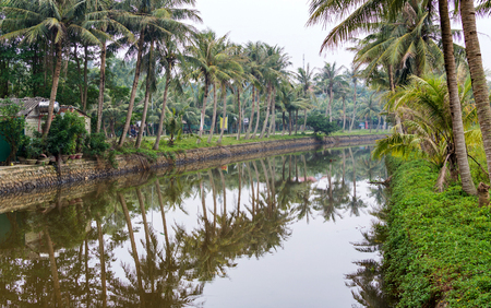 Tropical river landscape green view with coconut palms on the banks of canal in Vietnam