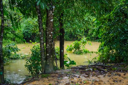 Hoher Wasserstand im Fluss nach dem Regen während der Regenzeit in Vietnam Standard-Bild - 93626399