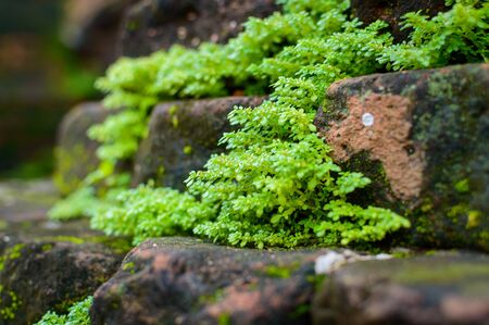 Moss and rock