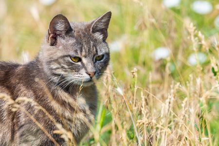 Portrait of grey cat in green grass