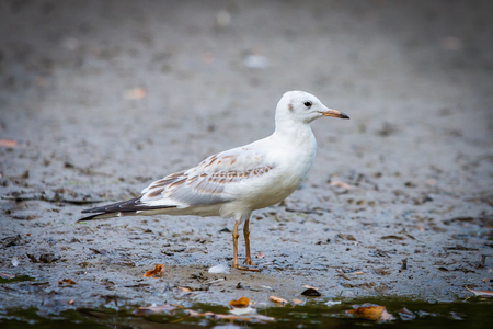 River gull on coast of river in wild nature Stock Photo