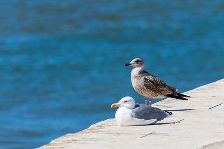 Two seagulls standing on stone. In the background sea Stok Fotoğraf