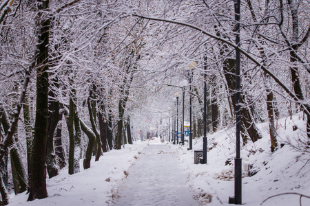 Winter landscape. Beautiful winter forest. Extreme snowfall in city park. Trees branches and trunks covered with snow.