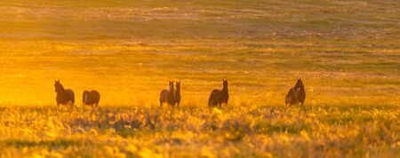 Wild horse in wildlife on golden sunset.