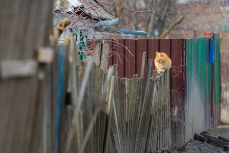 Ginger cat on the wooden fence in village Zdjęcie Seryjne