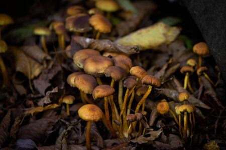 Many dangerous inedible mushrooms in a dark forest. Poisonous mushrooms, hazardous to health. Reklamní fotografie