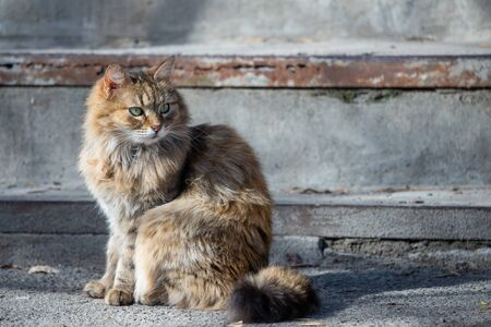 Street houmless cat in the sunny day.