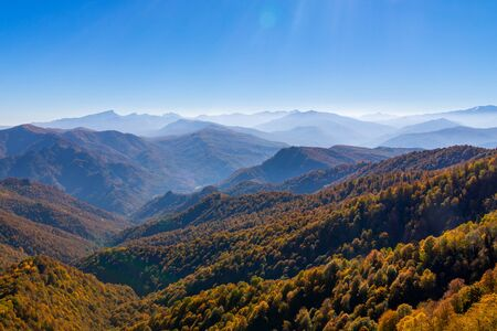 Scenic landscape with trees in mountain forest in autumn.