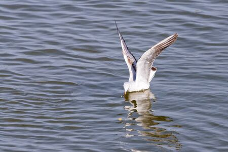 Gull. It's not a sea gull. She lives on the Volga river and probably never saw the sea...