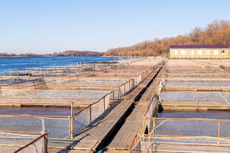 Tanks outdoors of farm for industrial breeding sturgeon fish.