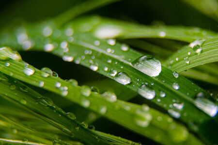 Green leaf with drops of water. Macro shot. 스톡 콘텐츠 - 146900589