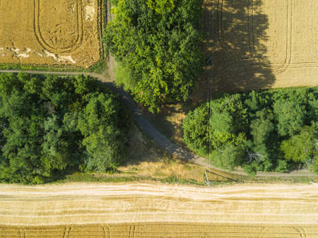 Aerial landscape of summer wheat and barley field crops for harvest, row of trees on farm.