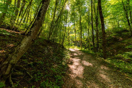 Walking pathway in forest or park. The sun's rays make their way through the foliage.