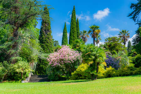 City park with tropical trees, lawn with grass, cypress trees.