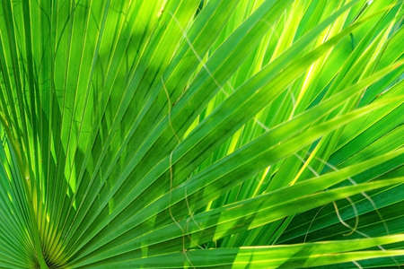 Palm leaves texture decoration resource with shadow.
