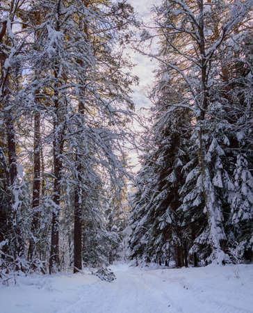 Snow covered trees in the winter forest with road. Stock Photo