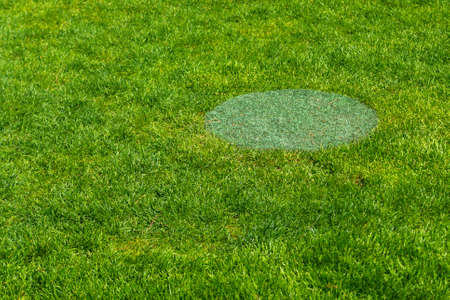 The manhole cover camouflaged as grass on grass in park.