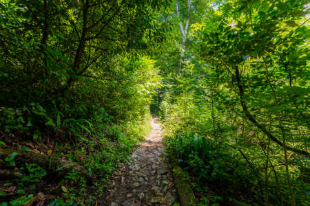 Narrow path walk in shadow of trees in a park. Active rest in hiking.