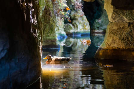 Ducks in stone tunnels and pool in Quinta da Regaleira, Sintra, Portugal.