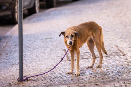 A tied up dog on a leash waits for his people.