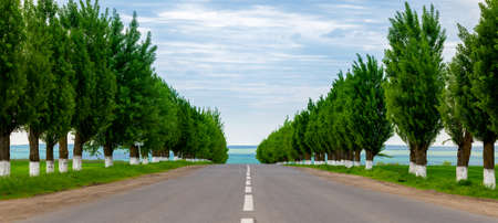 A rows of trees along the road.