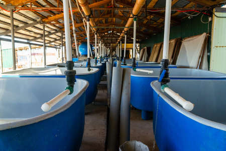 Pools for breeding sturgeon fish on fish farm.
