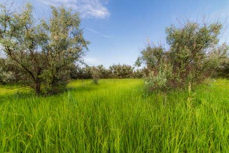 Summer high grass scene. Grassland nature in summer.