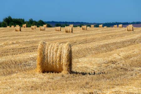 Straw bales or hay rolls on farmland field. Harvest concept