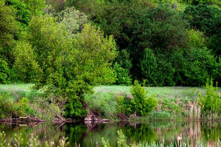 Forest spring or river flow landscape, calm nature background. 版權商用圖片