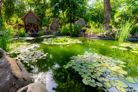 Pond landscaping with aquatic plants and water lilies. Garden decor 版權商用圖片
