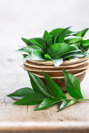 Fresh curry leaves in coconut bowl on wooden background close-up copyspace